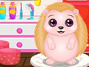 Baby Hedgehog Salon