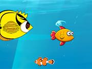 Fish Simulator