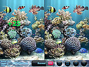 Sea Bubbles 5 Differences