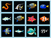 Fish Connections