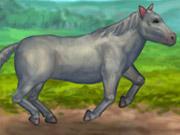 Play My Pet Horse